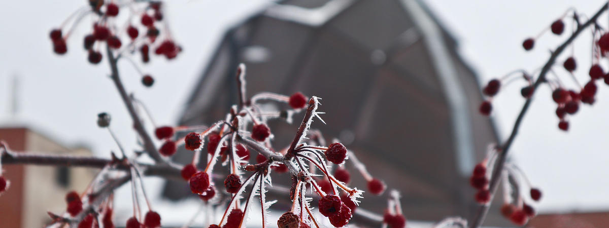 Artistic image of frosted berries