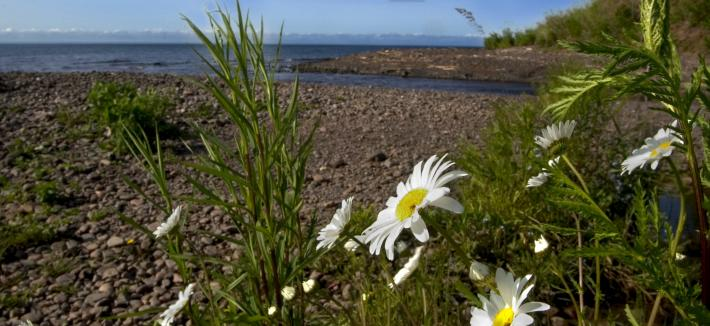 Spring Time in Duluth