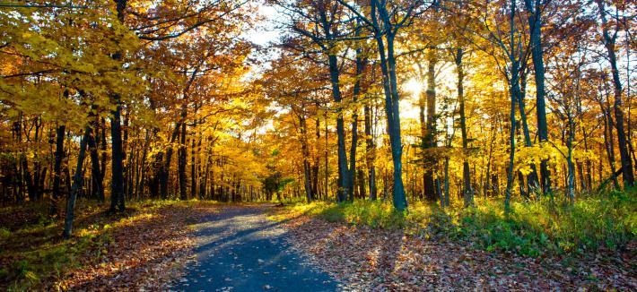 Fall Walk at UMD