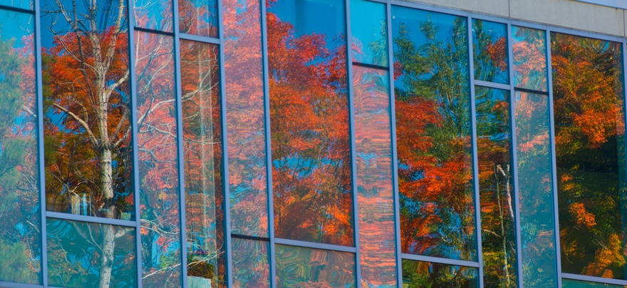 Window with fall leaves reflecting