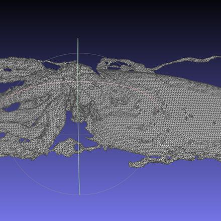 3D modeling of the squid using data sets from MRI.