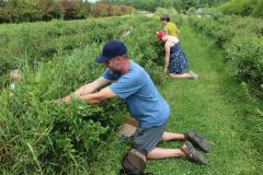 Image of David Syring and some of his students harvesting a local favorite - blueberries!