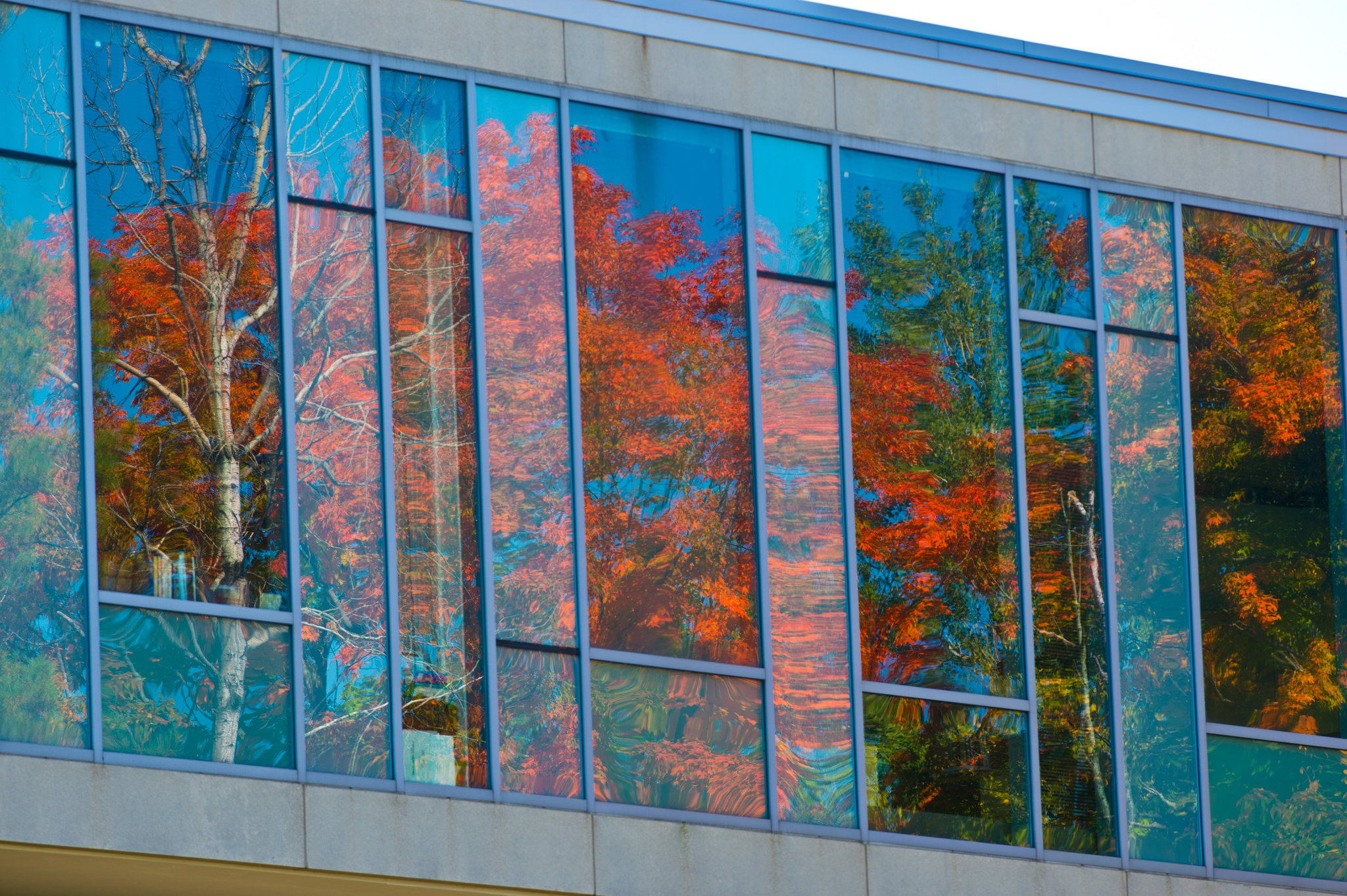 Fall color in window of building